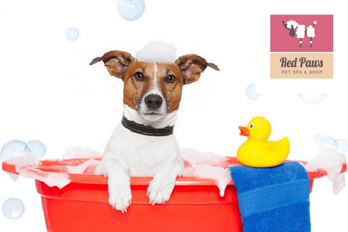 product-red paws spa
