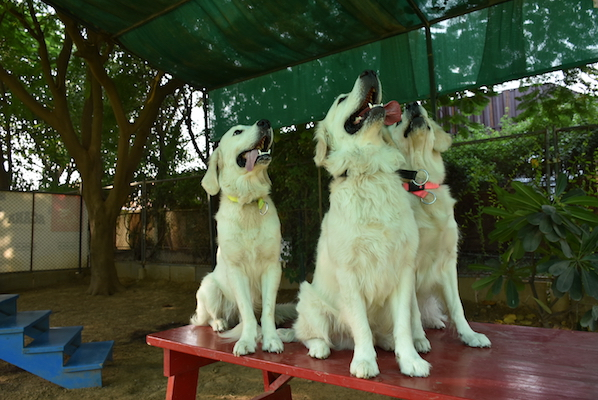 vetco happy dog 3