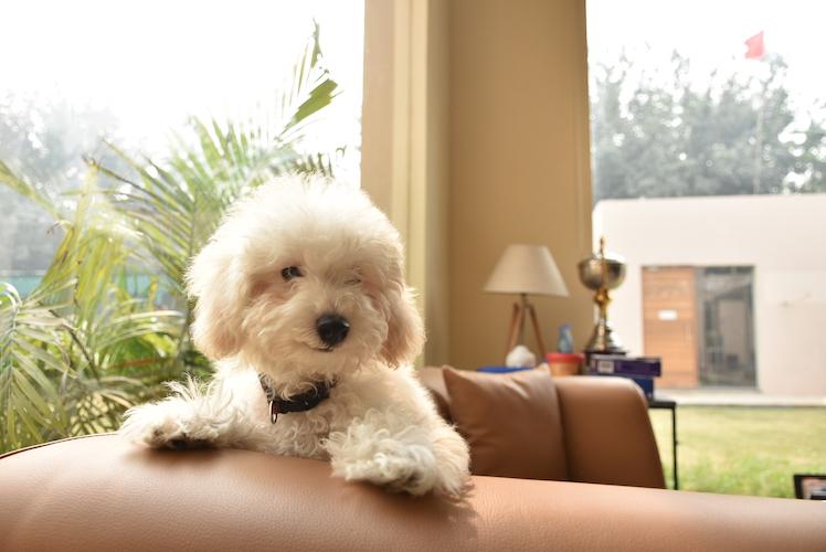 vetco happy dog 1