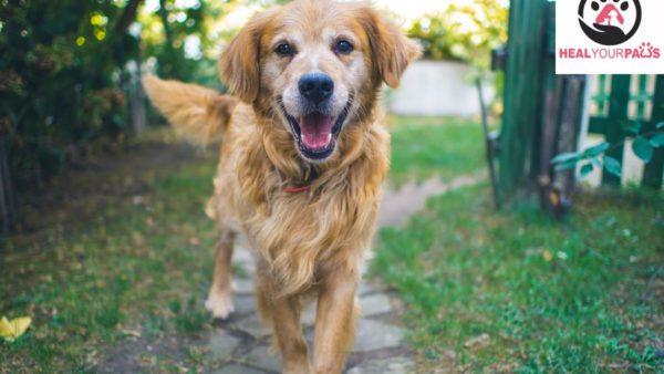 Up to 20% Off Dog Training at Sainik Farms, New Delhi