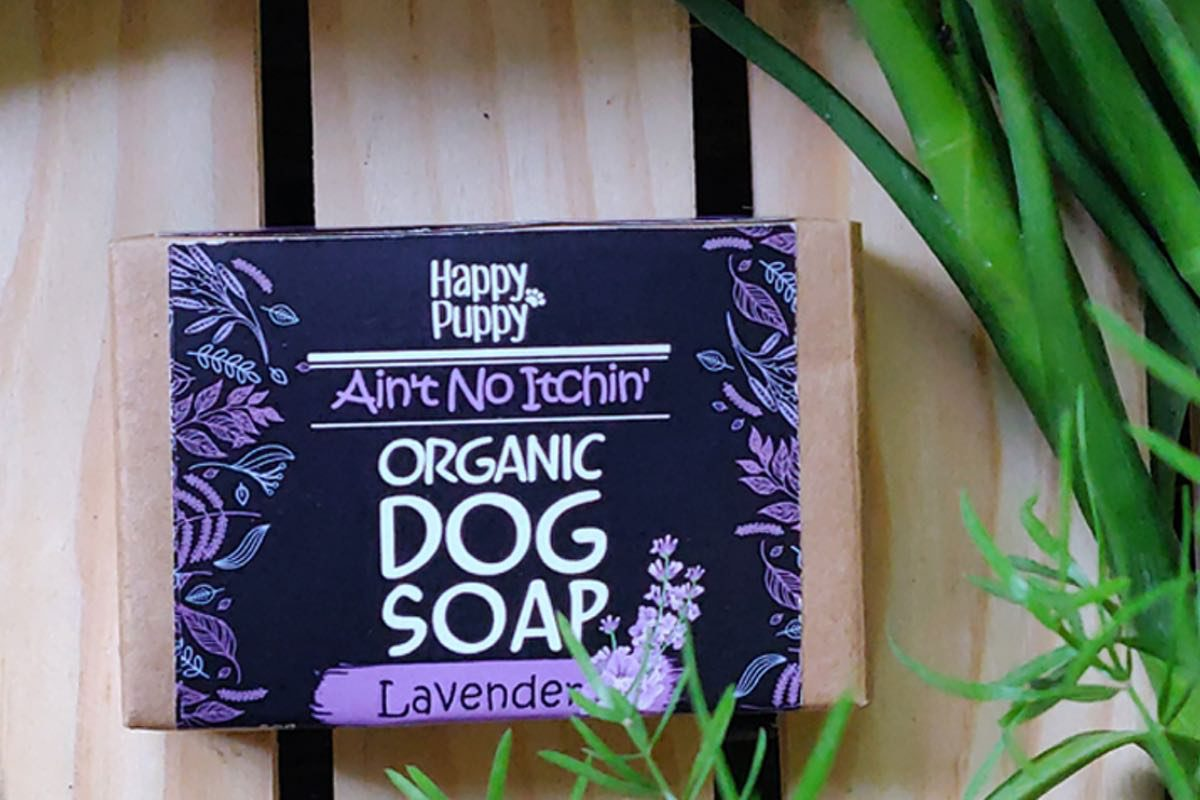 happy puppy itchn
