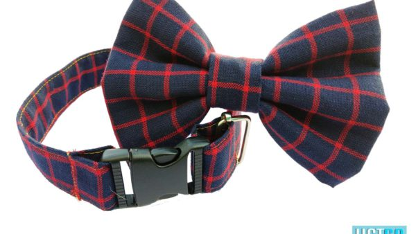 Hazel and Co Box't Up Dog Collar & Bow Set