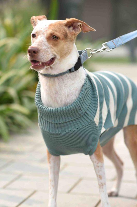 Mutt Ofcourse Emerald & White Dog Sweater 2