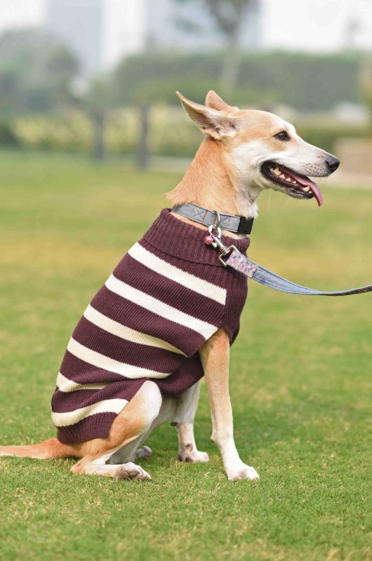 Mutt Ofcourse Purple & White Dog Sweater