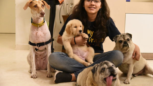 Wizard of Dogs At Home Dog Training, Gurgaon