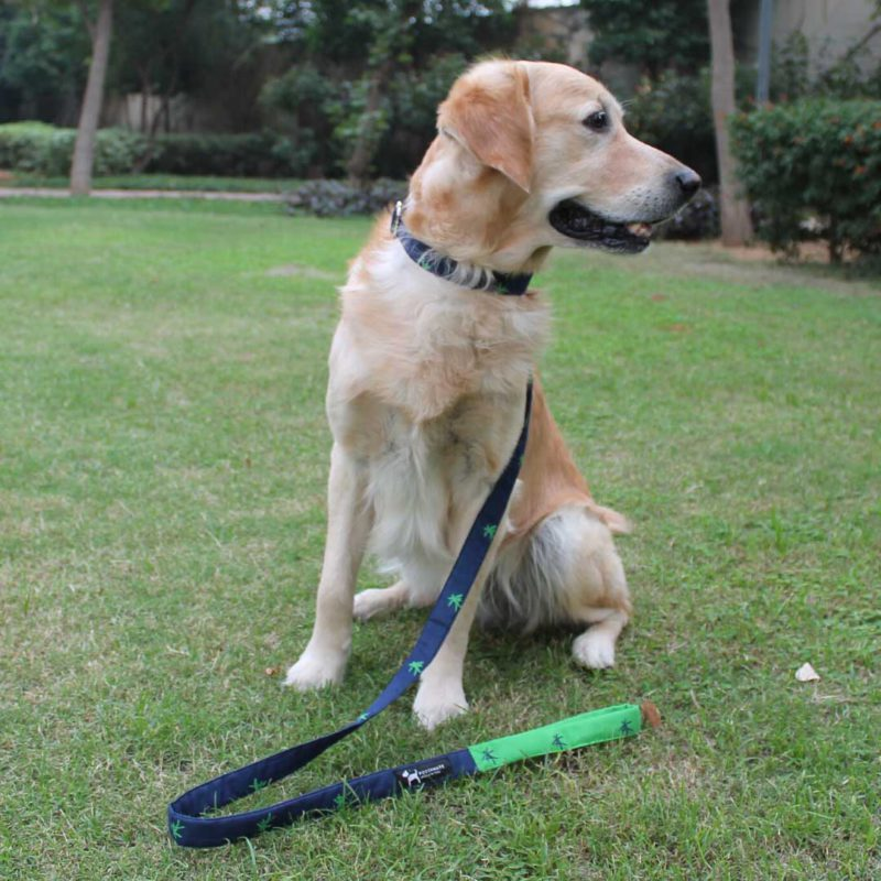 PoochMate Cotton Mandarin Dog Collar - Green & Navy