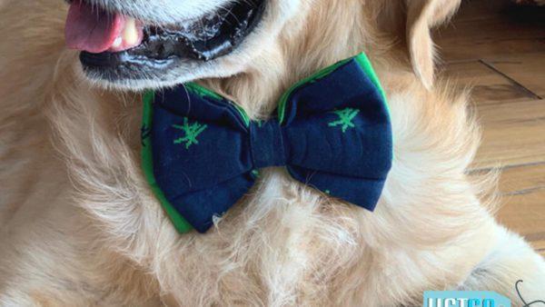 PoochMate Mandarin Bow Tie - Green & Navy