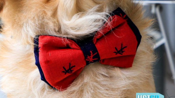 PoochMate Mandarin Bow Tie - Red & Navy