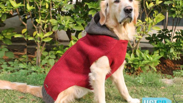 PoochMate Milano Hooded Dog Sweater - Maroon
