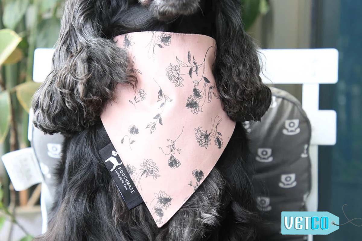 PoochMate Old Rose Floral Bandana For Dogs