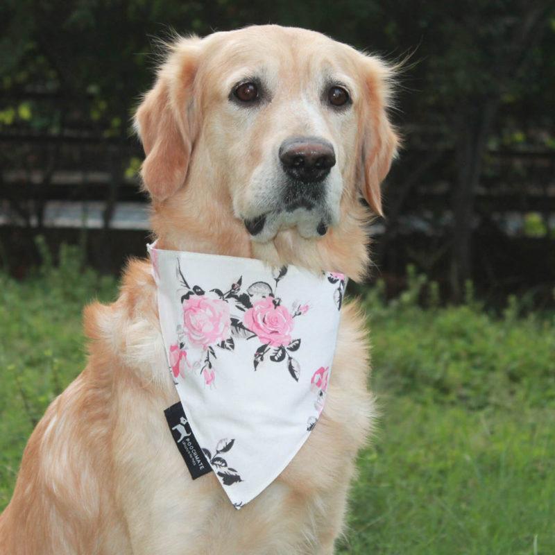 PoochMate Vintage Floral Bandana for Dogs