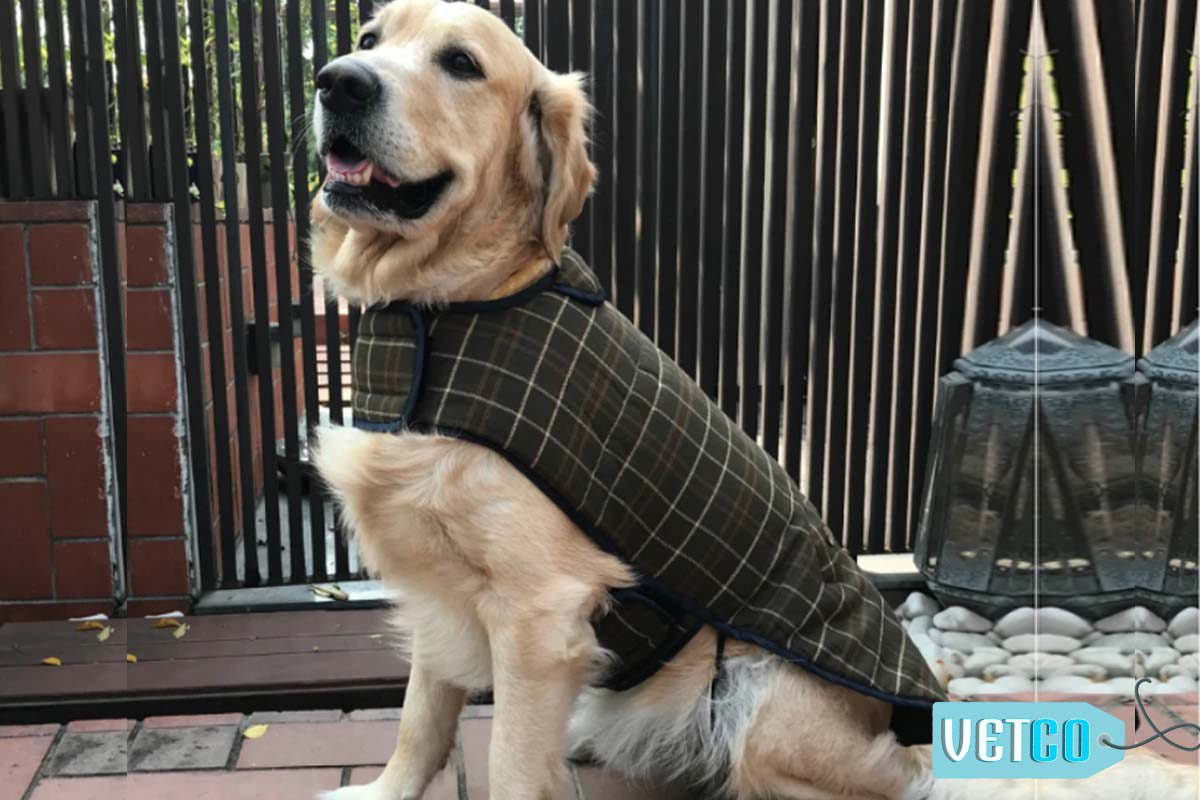 PoochMate Wool Plaid Winter Dog Coat - Olive