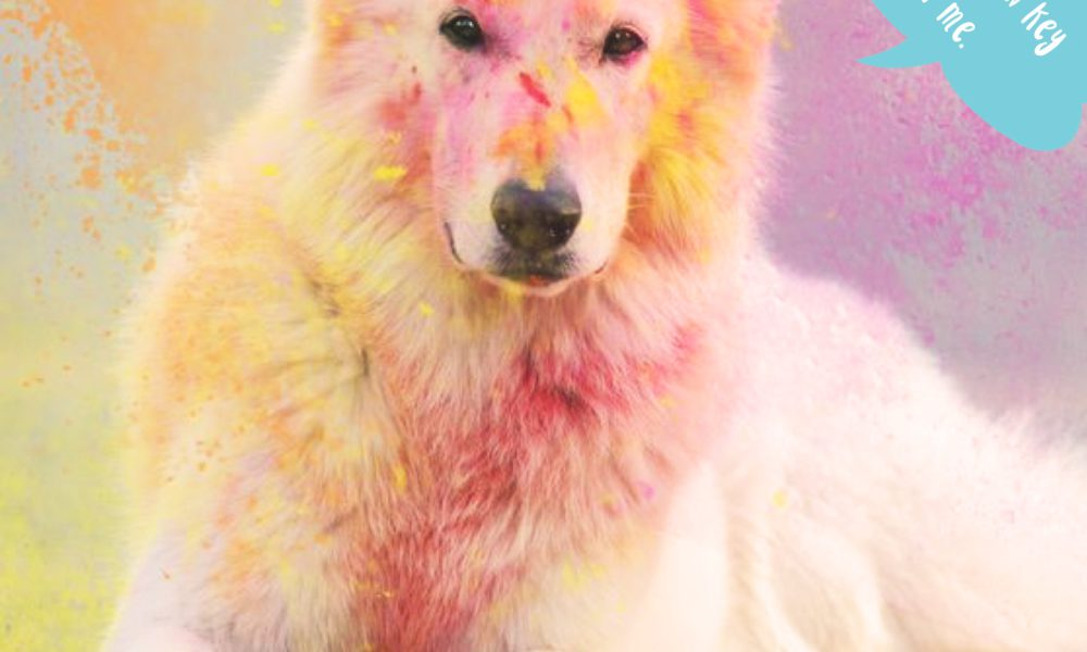 Is It Safe to Play Holi with My Pet?