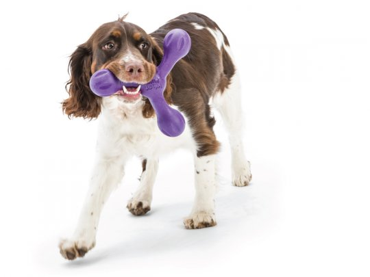 West Paw Zogoflex Echo Skamp Fetch Dog Toy