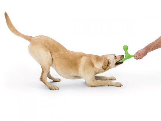 West Paw Zogoflex Echo Skamp Fetch Dog Toy