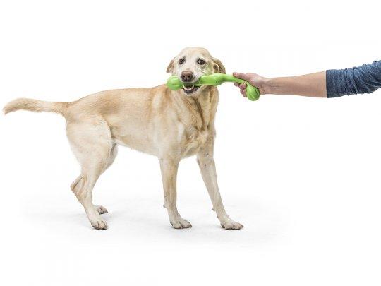 West Paw Zogoflex Echo Zwig Fetch Dog Toy