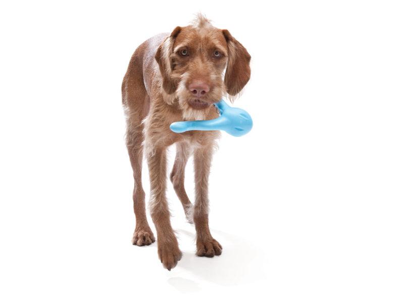 West Paw Zogoflex Tizzi Dog Toy
