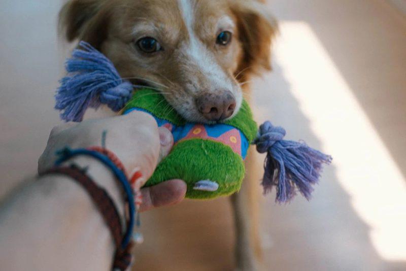 Zee.Dog Alien Flex Flow Dog Toy