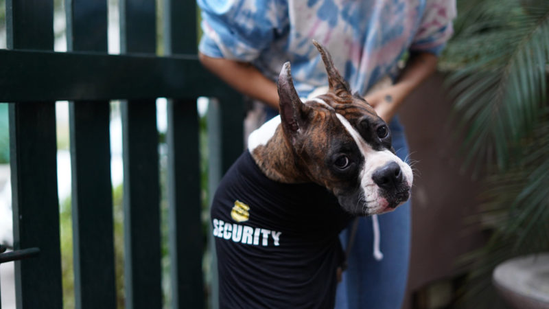 Impawsters Guard Doggo Tee for Dogs