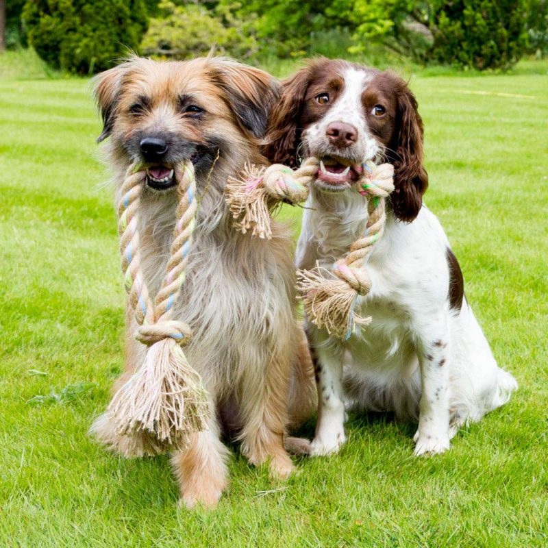 Beco Pets Rope Jungle Ring Dog Toy 1