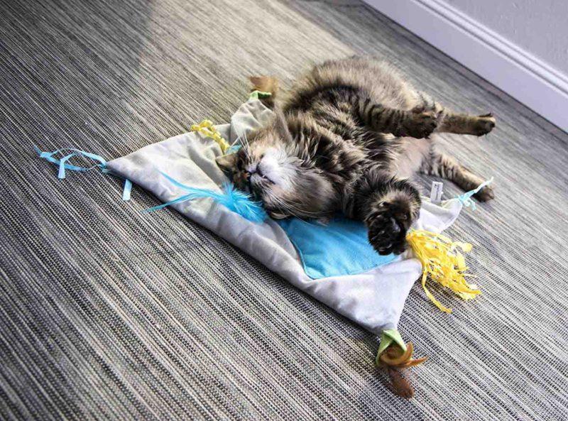 SmartyKat Purrfect Play Cat Activity Mat