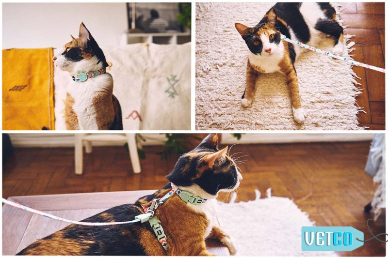Zee.Dog Marcuch Cat Leash & Harness Set