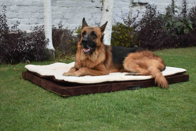 Barks n Wags Brown & Cream Lounger Dog & Cat Bed