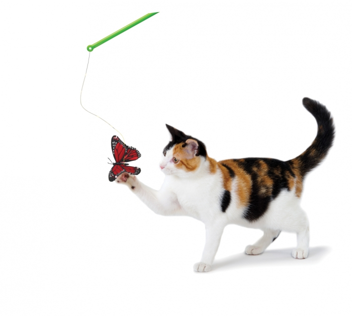 Petstages Butterfly Chase Wand Cat Toy