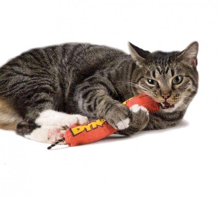 Petstages Wild Times Dynamite Cat Toy