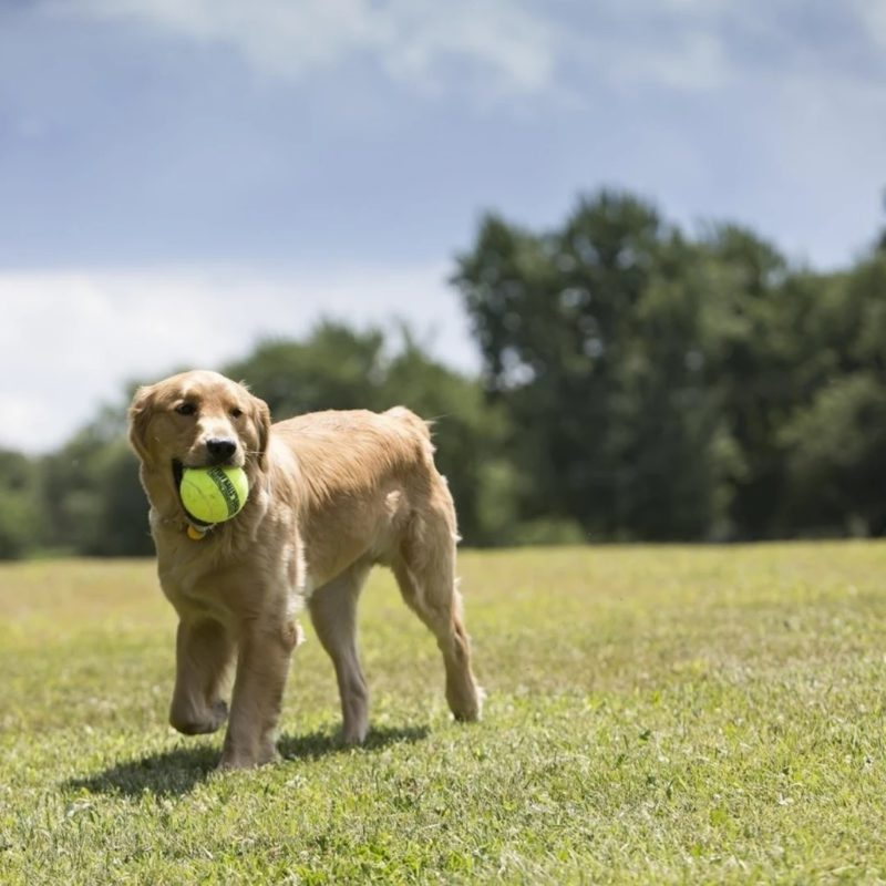 Petsport Giant Tuff Ball Dog Toy
