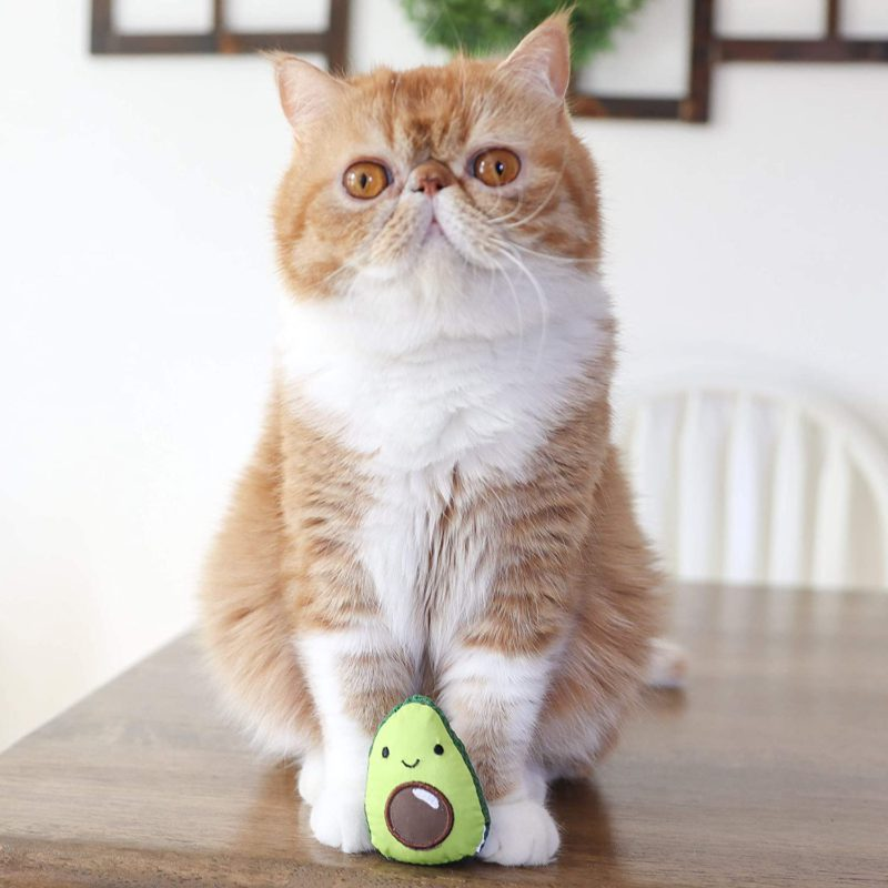 Petstages Lil' Avocato Cat Toy