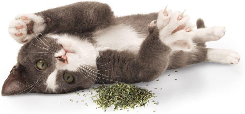 SmartyKat Organic Catnip Pouch, 14 gms