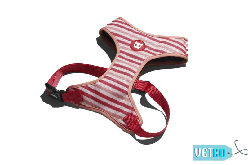 ZeeDog Peppermint Air Mesh Plus Dog Harness