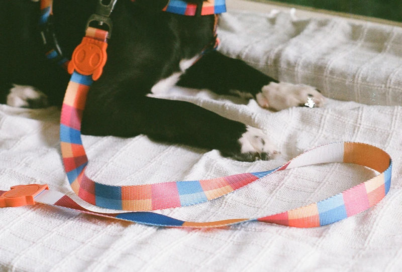 Zee.Dog Parker Air Mesh Plus Dog Harness