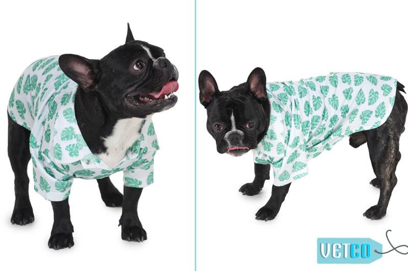 Barks & Wags Havana Palms Printed Dog Shirt