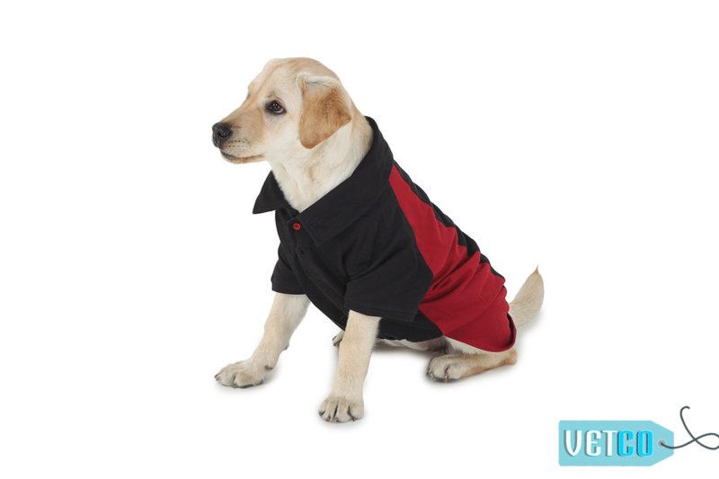Barks & Wags Maroon & Black Polo Dog Shirt