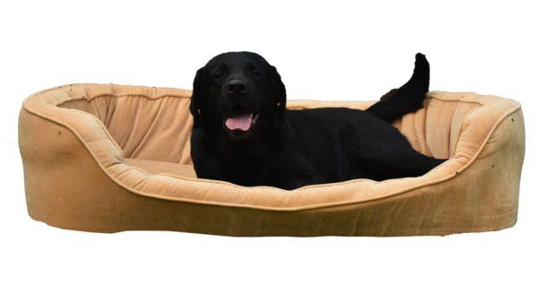 Barks & Wags Yellow Velvet Sofa Dog & Cat Bed